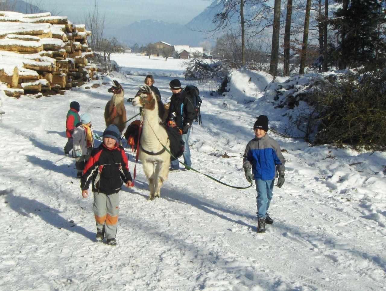 Lamatrekking Winter