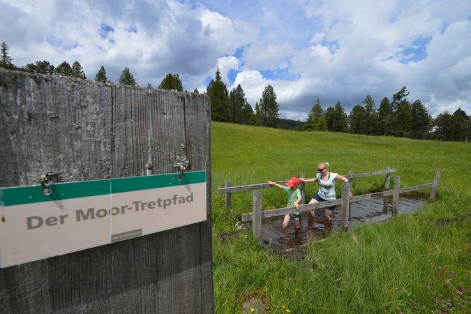 Moorbäer path Langis