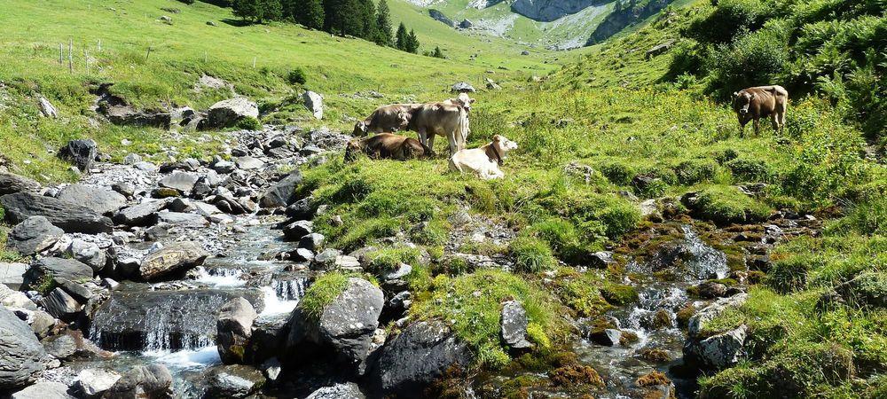 Höhenweg Fürenalp - Dagenstal - Zieblen
