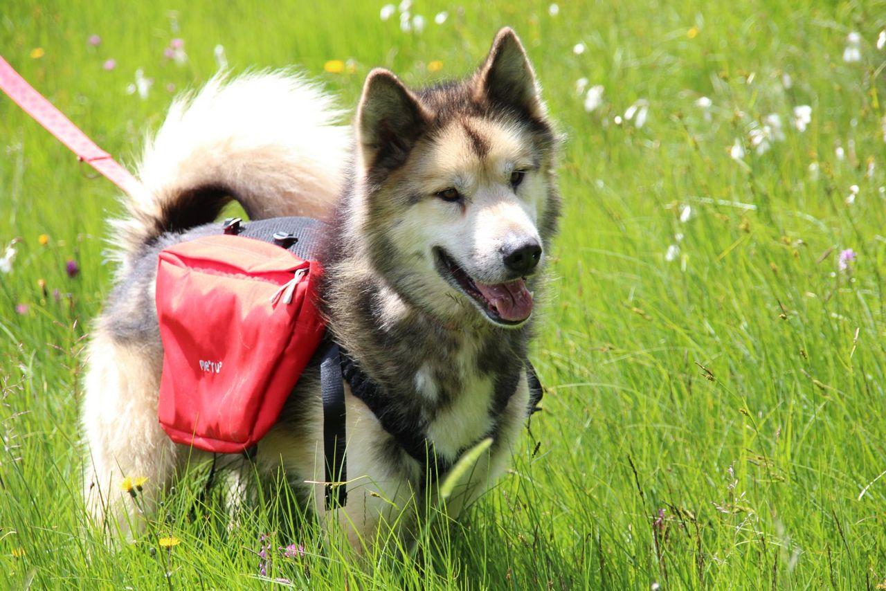 Schlittenhunde-Erlebnisse