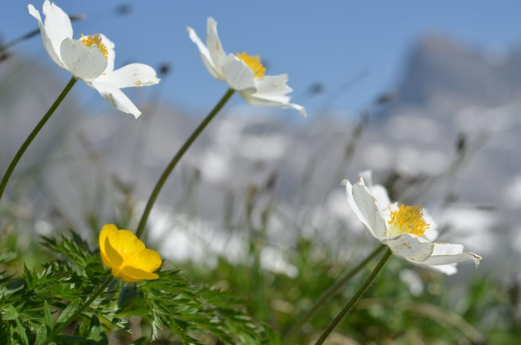 Blumenpfad Tomlishorn
