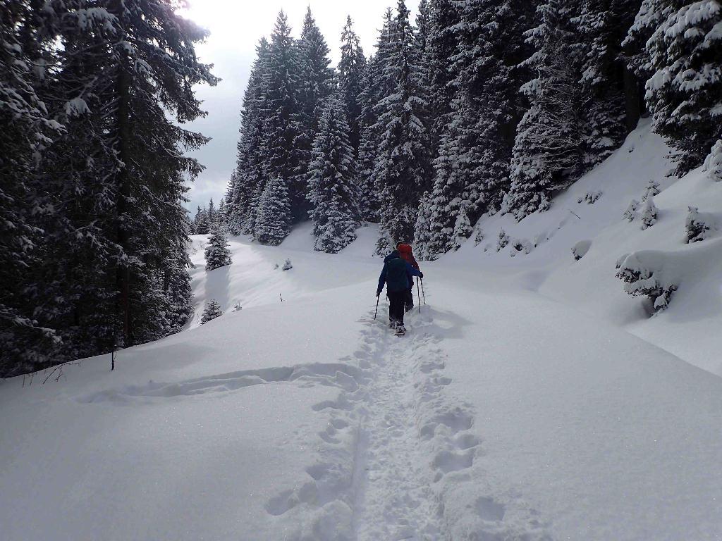 Jänzi Panorama Trail, Langis