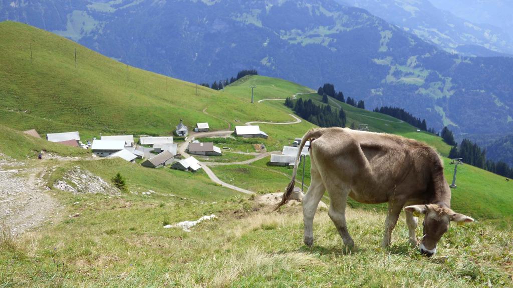 Höhenweg Turren - Brienzer Rothorn